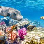Коралловый риф